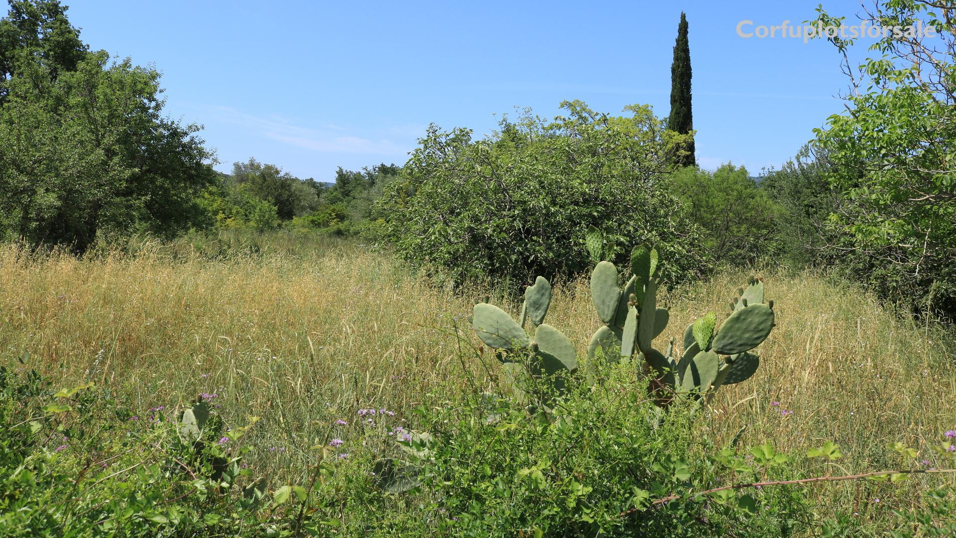 Flat plot in the nature of Ano Korakiana, Corfu